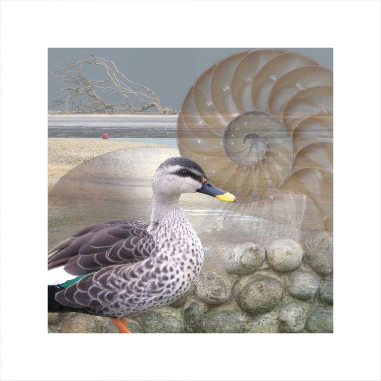 Claire Gill, Limited edition prints, digital photomontage, fine art prints, hahnemuhle, coastal art, Collect Art, seascape 6, nautilus shell, Holkham, North Norfolk