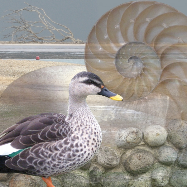 Claire Gill. fine art card, fine art greeting card, greeting card, seascapes, photomontage, coastal art, limited edition prints, seascape 6, Holkham, duck, nautilus
